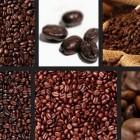 Çekirdek kahve'nin uzmanı