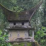 Endonezya Sulawesi Adası Kahveleri