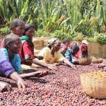 etiyopya-kahvesi
