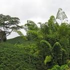 Kolombiya Kahvesi