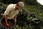 Kosta Rika Kahvesi