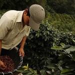 kostarika-kahvesi